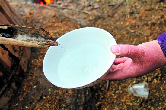酿酒技术:五粮之一高粱酒的制作方法