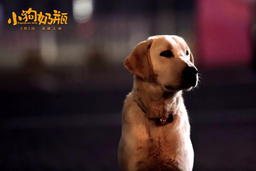 成人电影人与动物2_他们之间的信任,承诺,忠诚,在成人的世界里,更加突显珍贵