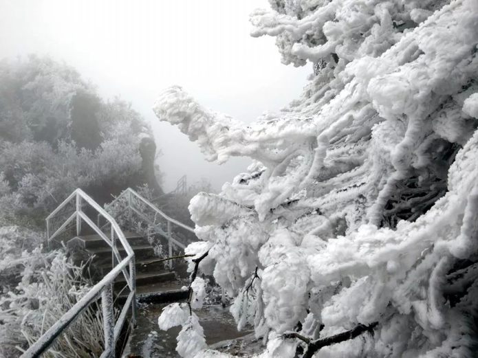 不要再吐槽广东没有冬天了,这里都下雪了!您预定的冷空气已签收